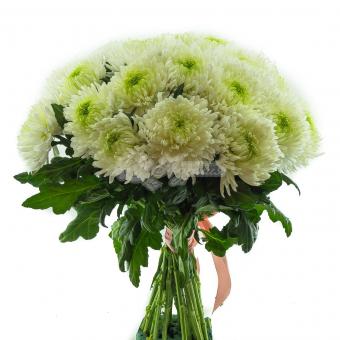 Букет из 21 Крупноголовой хризантемы